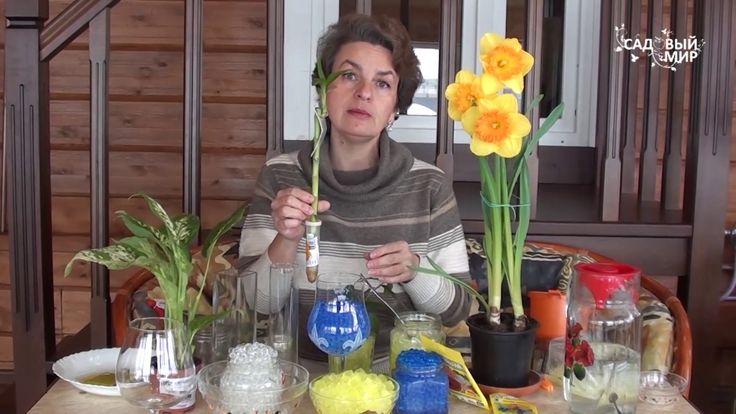 Как применять гидрогель  Выращивание растений в гидрогеле