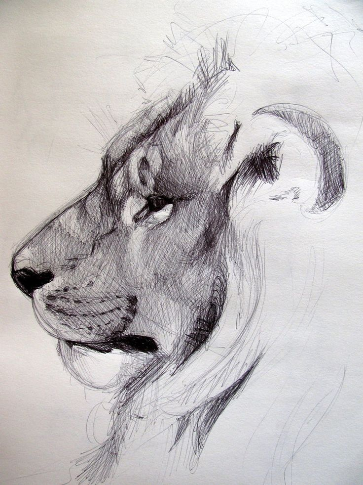 40 beautiful and realistic animal sketches for your for Inspirational pencil sketches