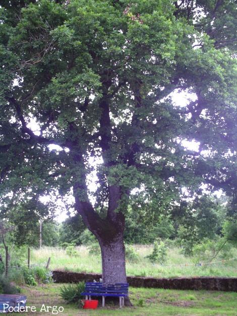 La nostra grande quercia