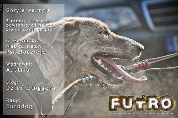 Futro #005
