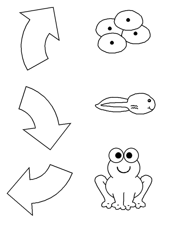 Best 25+ Frog life cycles ideas on Pinterest | Spring cycle ...