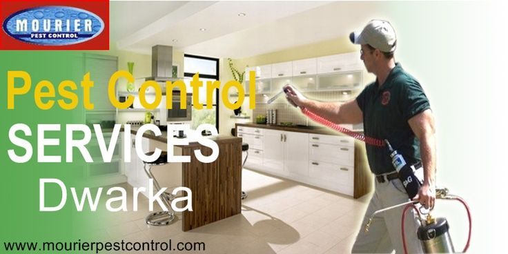 Call @ 9999787571. Pest Control service in Dwarka is able to eradicate the presence of contagious pests with instant effects. Choose your premium pest control service now.