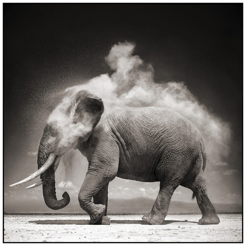 shake the dust off and move on: Elephants, Photos, Animals, Exploding Dust, Nick Brandt, Art, Nickbrandt, Photography, Black