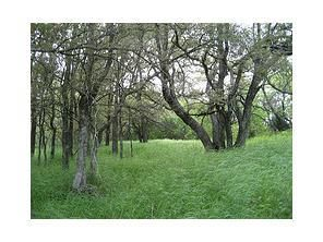 98 acre ranch with beautiful 12 ac lake, perfect for luxury home or subdivision. Ag exempt, nice 30 X 50 insulated workshop-barn w concrete floors, 22