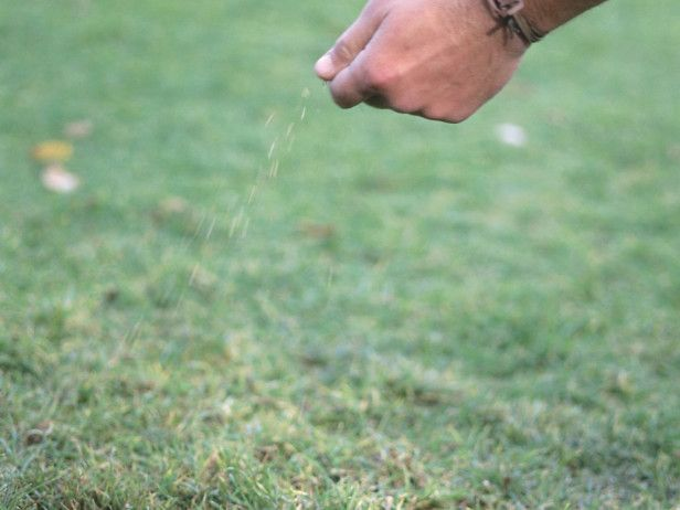 17 Best ideas about Fall Lawn Care on Pinterest   Yard landscaping ...