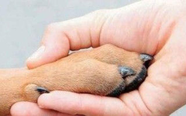 Ragazza vorebbe adottare un cane ma glielo rifiutano perchè è disabile #disabile #disabilità #cane #canile