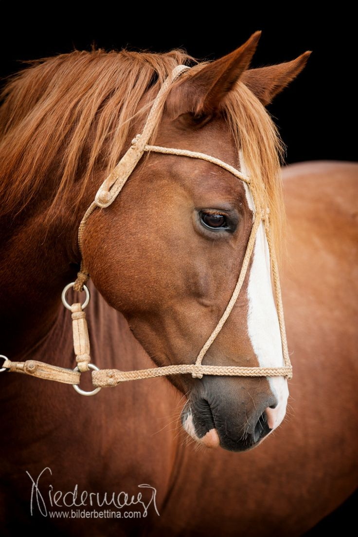 Criollo - Pferdefotografie, Hundefotografie, Photography Bettina Niedermayr Horse - People & Horse - Dog portrait - Stallschilder - Calendar, Pferdekalender, Haflingerkalender mit Kohlfuchs Liz.  Styria