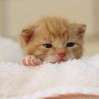 #dogalize Quando aprono gli occhi i gattini appena nati #dogs #cats #pets