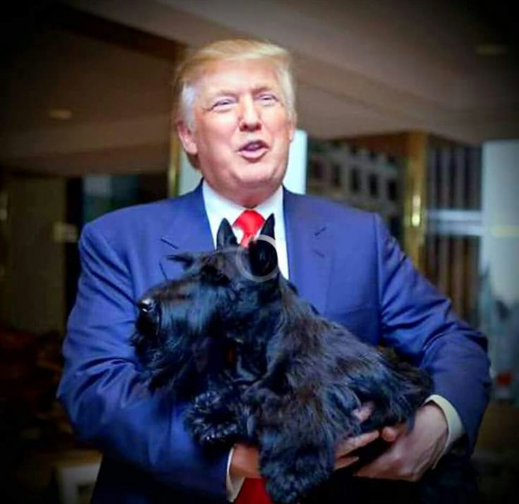 Put the Scottie down- YOU ARE NOT QUALIFIED TO HOLD HIM!!