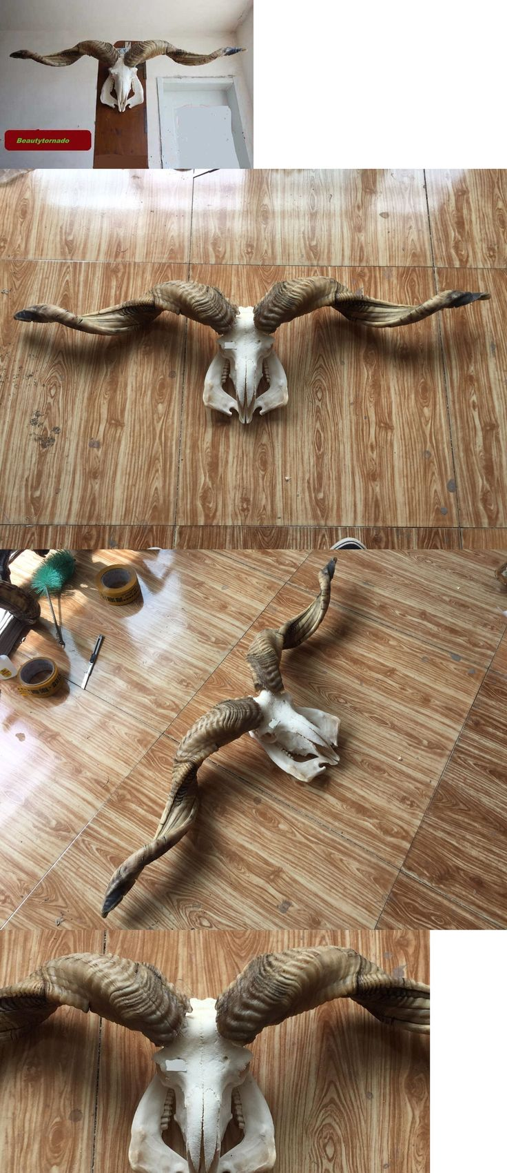 Other Taxidermy 22702: 42 107Cm Huge Taxidermy Skull Long Horns Sheep Skull Head Mutton Goat Tibet 566 -> BUY IT NOW ONLY: $189 on eBay!