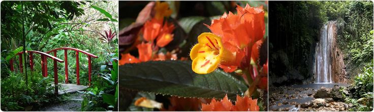 The Official Botanic Garden Of Rutgers: 17 Best Images About Caribbean Botanical Gardens On