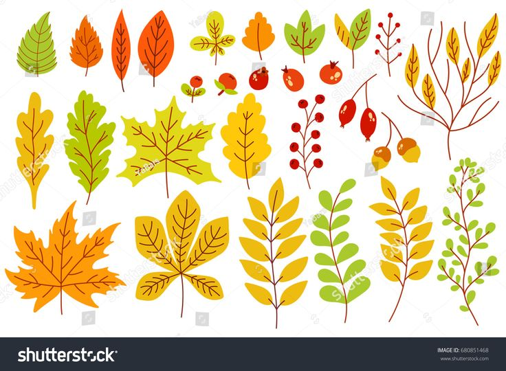 Set of colorful autumn leaves and berries. Isolated on white background. Simple cartoon flat style. vector illustration.
