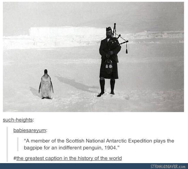 Best caption ever - Funny tumblr post