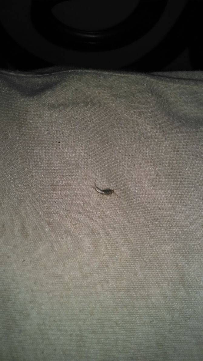 1000 ideas about silverfish on pinterest roaches bed for How to get rid of silver fish