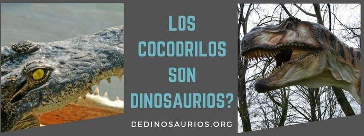 Si te has preguntado alguna vez si los cocodrilos son dinosaurios, tenemos la respuesta. También tenemos un montón de datos chulos sobre cocodrilos.