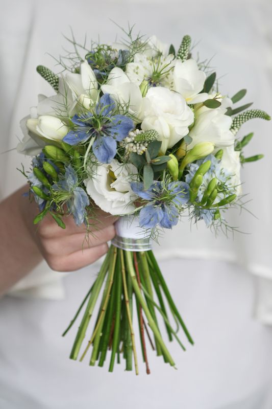 Love-in-a-Mist (Nigella Damascena): Care and Growing Guide