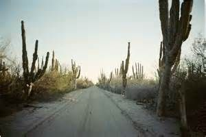 old desert dirt road - Bing Images