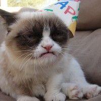 La mina de oro en internet, Grumpy Cat cumple dos años