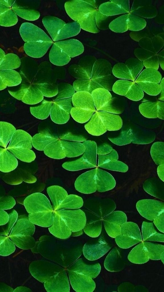 shamrock wallpapers cell phone