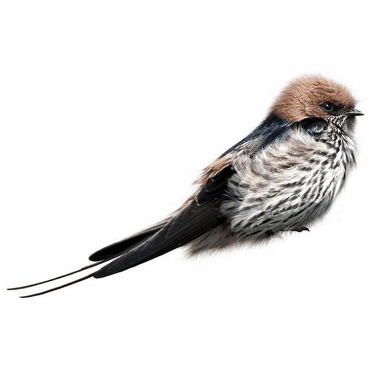 KEK Amsterdam Birds Muursticker - Zwaluw