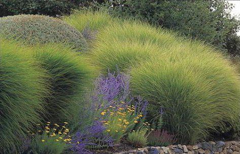 """Le jardin Plume est un jardin de vagues. Les plantes, uniquement herbacées, y cohabitent et se soutiennent pour mieux affronter le vent, la pluie et le soleil. Malgré la hauteur de certaines d'entre elles (près de 2 mètres), aucun tuteur n'est nécessaire pour les soutenir. Cette """"prairie"""" fantastique est composée de vivaces : veronicastrum, sanguisorbas, thalictrum, catananches, oeillets des chartreux et de graminées souples, stipa calamagrostis, calamagrostis Karl Foerster, stipa barbata..."""