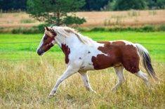 Pony on meadow stock photo