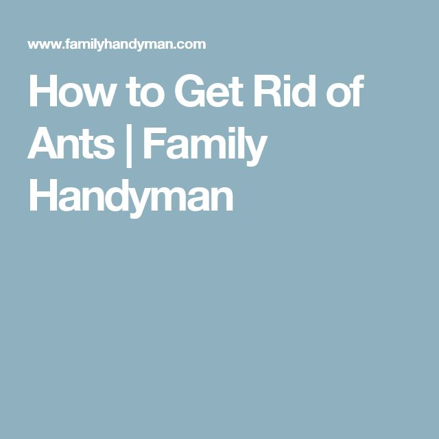10 best lawn care images on pinterest landscaping ideas lawn how to get rid of ants family handyman fandeluxe Gallery