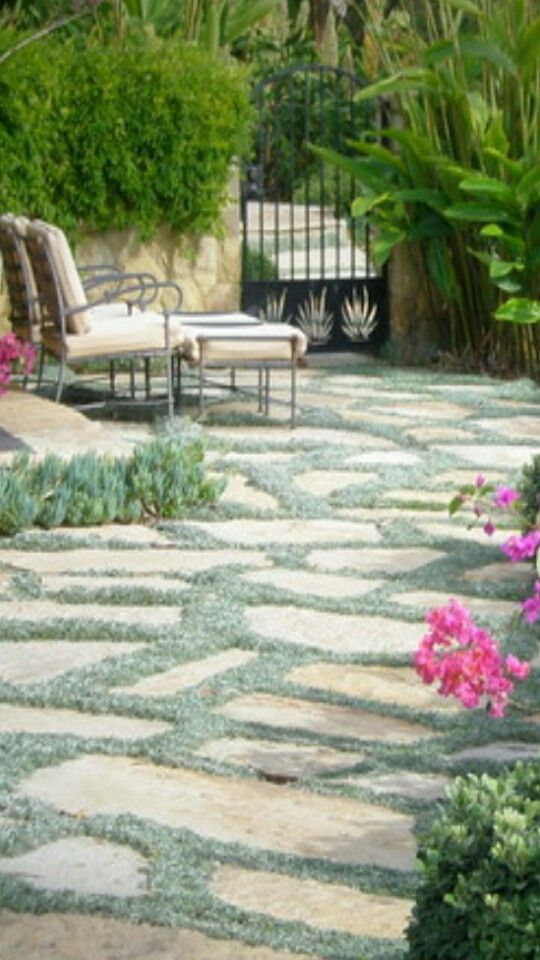 Flagstone with dymondia - beautiful!