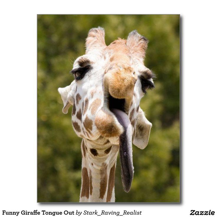 Giraffe Quotes Funny: Best 25+ Giraffe Tongue Ideas On Pinterest
