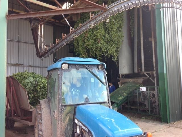 Hops in the barn #greenhop #hopharvester with old school tractor