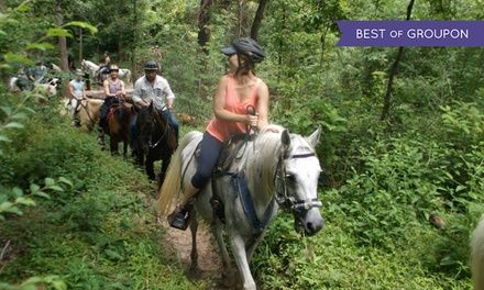 Seasoned riders offer basic instruction before guiding groups of two, four, or six across woodland trails