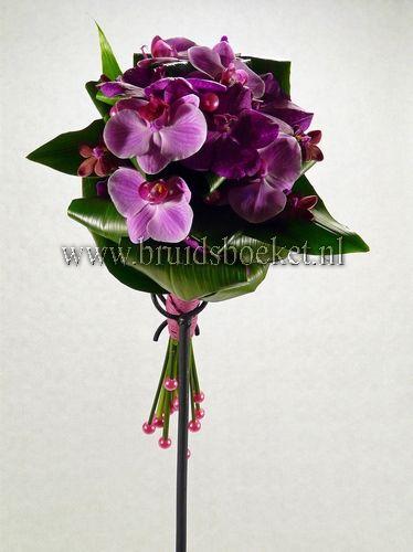 Paarse orchideeën 99,95