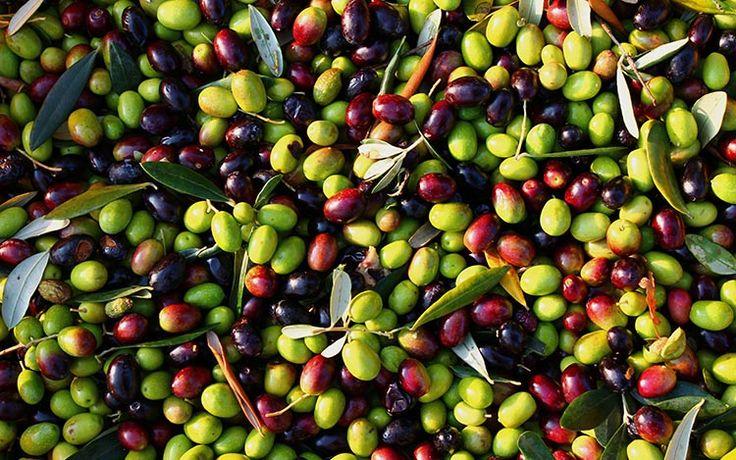 Del desecho de la aceituna a la energía de biomasa. Los subproductos obtenidos en la producción del aceite de oliva —bien sean los elementos residuales en
