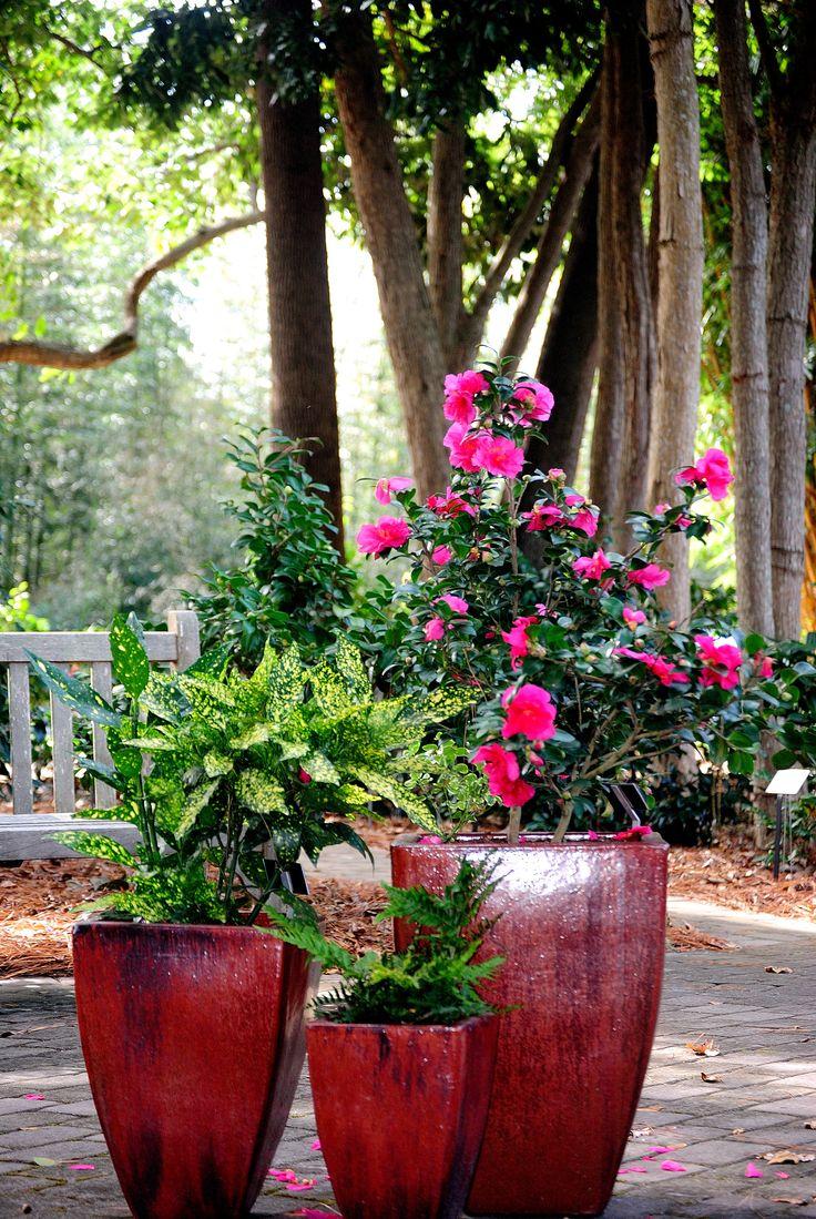 Container Gardening Simple U0026 Elegant Taken In The Camellia Garden November  13