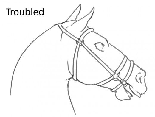 Signs that the horse is troubled, stressed or concerned
