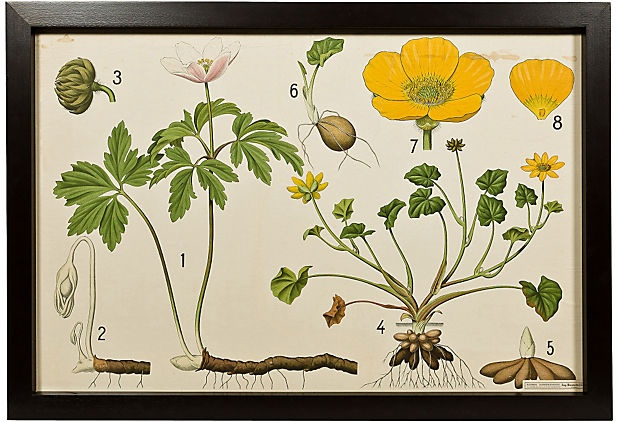 Yellow Flower Educational Plate: Yellow Flowers, Houses Beautiful, Katrien Vans, Flowers Education, Schuren Botanical, Botanical Bounty, Botanical Charts, Imaginary Houses, Education Plates