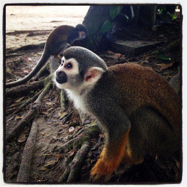 Monkey Island, Amazonas, Colombia.