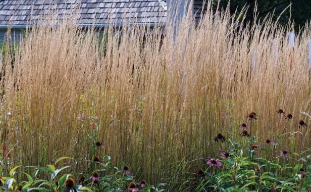 Designing with grasses fine gardening use grasses as for Small decorative grasses
