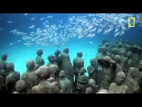 Best Marine Biologists Images On   Biologist Dream