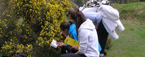 Trinity College Dublin | Botany | Ireland | Plants | Green | Flowers | Trees | Research