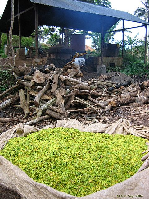 Alambic pour ylang-ylang, fabrication de l'huile essentielle d'ylang-ylang à Mayotte