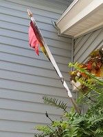 Bandera del orgullo LGTB quemada en Rochester - Foto: Uso permitido