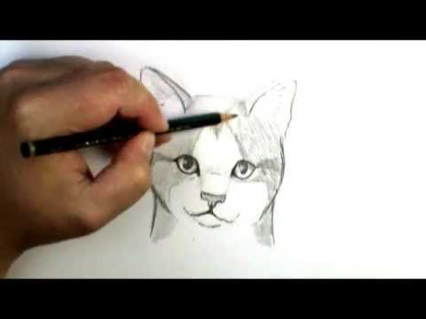 how to draw a cat face for halloween