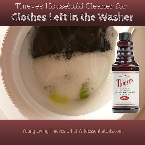 For the times when clothes are left in the washing machine, run the washing cycle again using Thieves Household Cleaner. It will clean and sanitise and remove the mildew stink. http://www.wildessentialoils.com.au