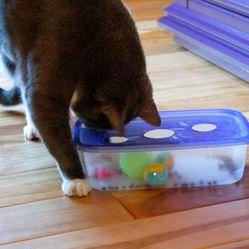fabriquer un jouet pour chat en un rien de temps et pour quelques euros !