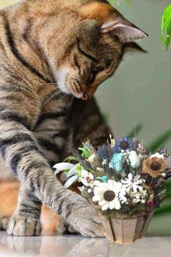 Mèo cũng am hiểu hoa khô nghệ thuật!