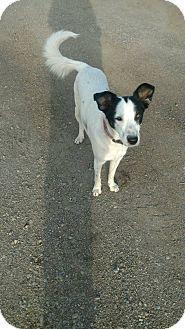 Chewelah, WA - Border Collie/Husky Mix. Meet Brutus, a dog for adoption. http://www.adoptapet.com/pet/17014529-chewelah-washington-border-collie-mix