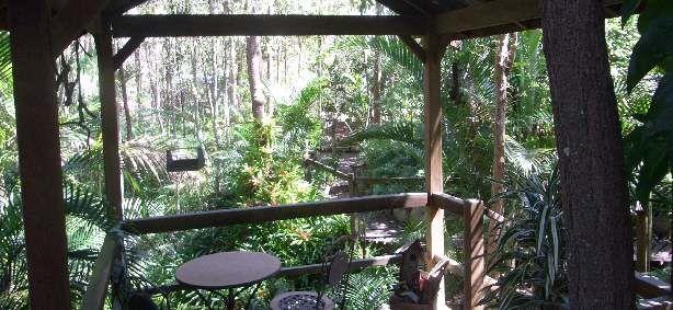 Rainforest gully gazebo