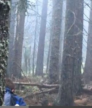 Tall Grey Alien Photographed By Hikers In Bulgarian Forest Friday, November 8, 2013
