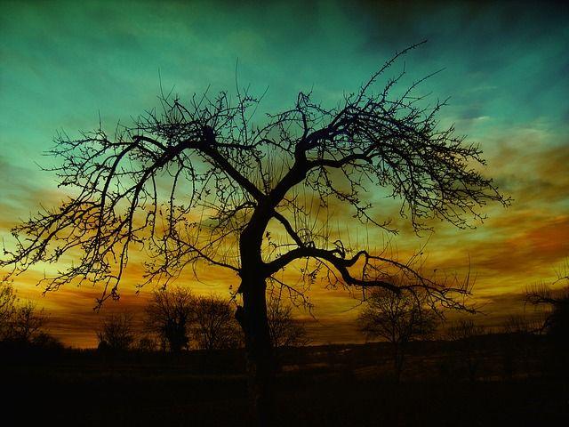 instelling, zonsondergang, sfeer, wolken